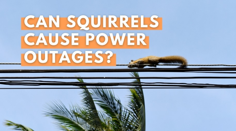 Can Squirrels Cause Power Outages