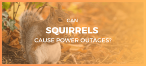 Squirrel Cause Power Outage?